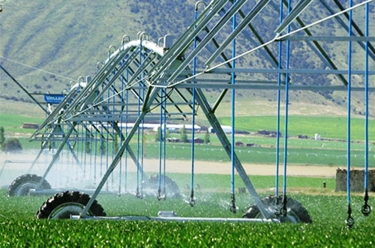 Alfalfa Irrigation