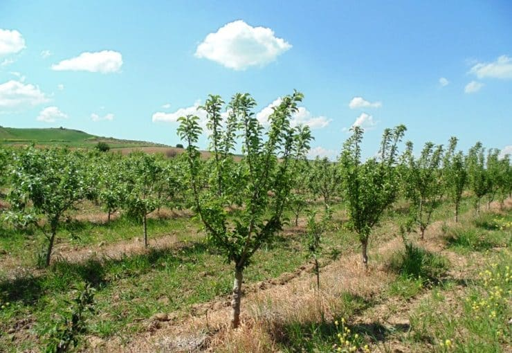 Apple Tree Climate Requirements