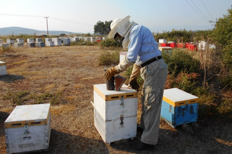 Beekeeping Supplies basics