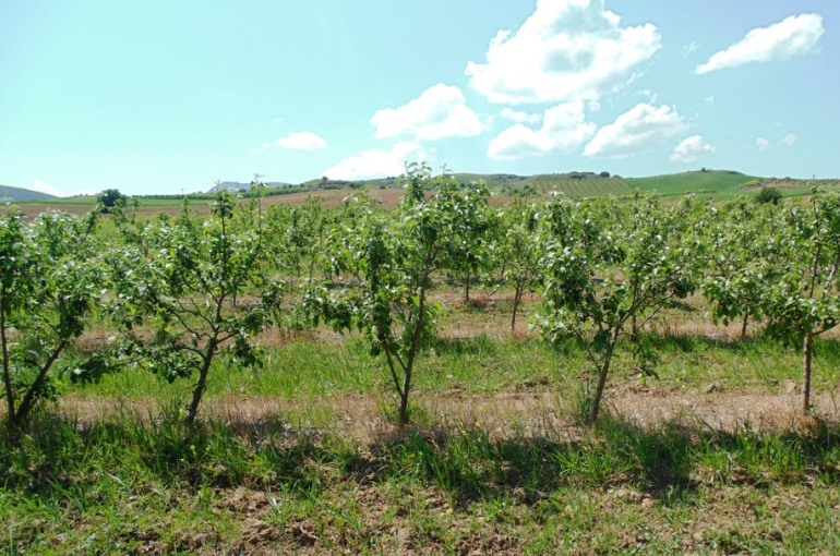 Starting an Apple Orchard - Wikifarmer