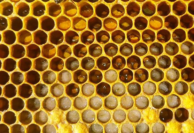 How do bees produce honey