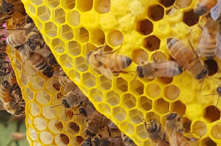 bee social structure