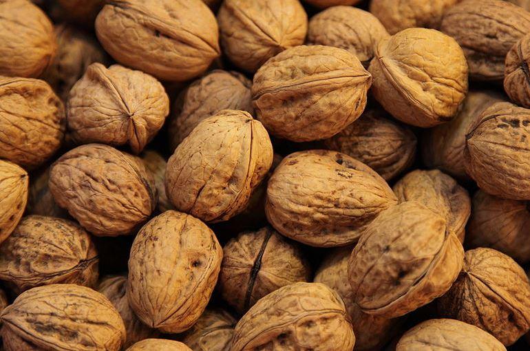 Walnut Tree Harvest and Yields