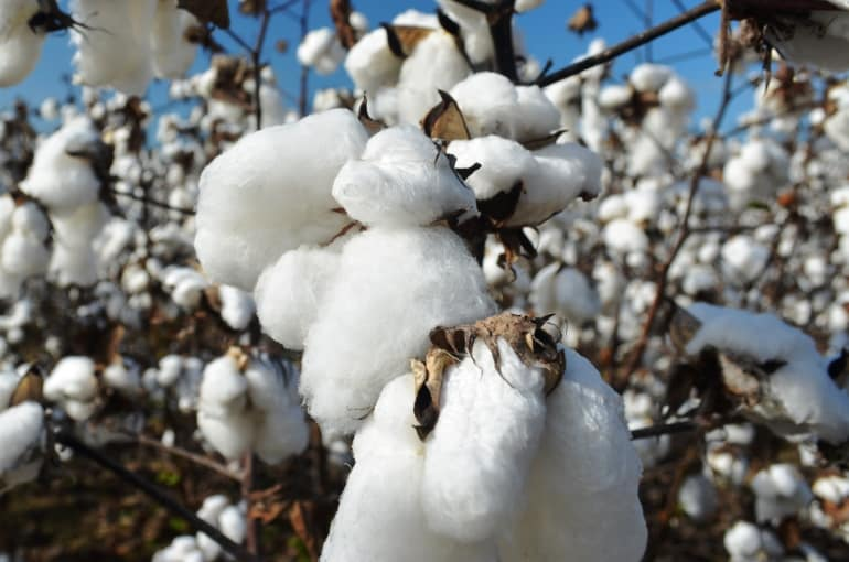 Cotton Info and Uses